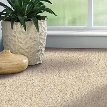 Shaw Carpet Bellera Collection | Fitchburg, MA